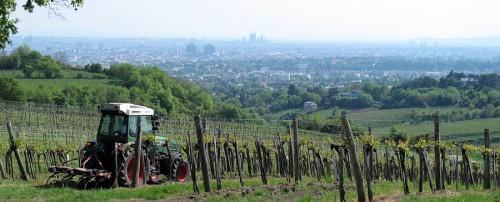 Wenen gezien vanuit de omliggende wijngaarden.