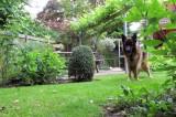 Santos in de tuin.