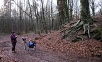 De grafheuvel waar we de cache vonden tussen de wortels van een oude boom.
