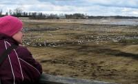 Femma kijkt uit over de duizenden kraanvogels.