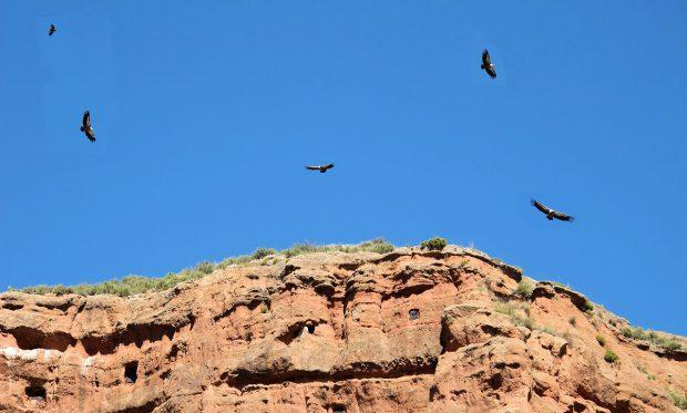 Een collage van gieren, cirkelend rond de rotsen.
