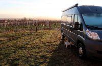 Ochtendgloren in de wijngaard...