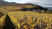 Herfst in de wijngaarden...