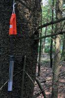 Vos nr. 6: kniptang en zendertje verstopt achter een boom. (Foto Arbo PH0AS)