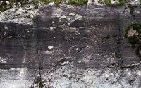 De 6000 jaar oude rotstekening uit de Steentijd.