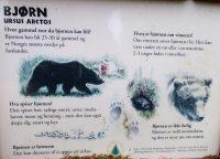 Uitkijken voor beren in het bos...