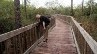 Een mooi pad door een natuurgebied met slangen en alligators...