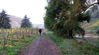 Aan de wandel langs het riviertje de Ahr.