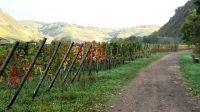 De herst komt eraan, de kaalgeplukte wijngaarden verkleuren mooi!