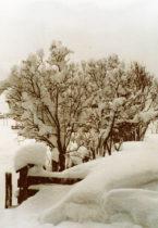 Uiteindelijk hadden we sneeuw genoeg!