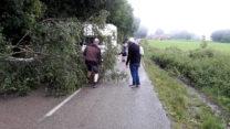 Een omgevallen berkeboom hebben we met mijn handzaagje gekortwiekt!