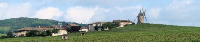 De beroemde windmolen waar het plaatsje Moulin-a-Vent zijn naam aan dankt. Een goede Cru Beaujolais!