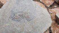 Er liggen heel veel fossiel-afdrukken op het muurtje.